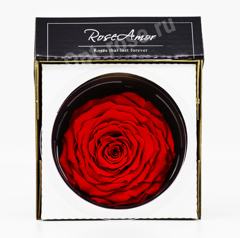 Стабилизированный Бутон Розы Кинг Rose Amor(Эквадор)Linda Цвет Красный (10-12см)