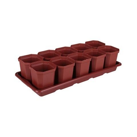 Набор д/рассады (10 стаканов, подставка) 410х170х90мм