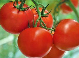 Томат Раиса F1 семена томата индетерминантного (Syngenta / Сингента) Раиса_F1_семена_овощей_оптом.jpg