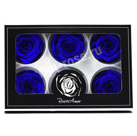 Стабилизированный Бутон Розы Rose Amour XL. Цвет Синий (Диаметр 6-7см)