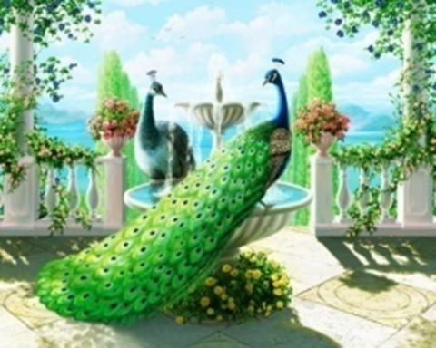 Картина раскраска по номерам 30x40 Павлины в саду (арт. KTL1879)