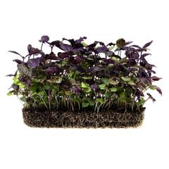 Базилик фиолетовый на корне (лоток) / 20 гр