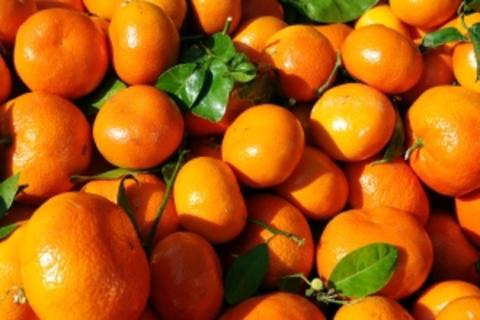 Jeff 7 -Tasty Tangerine
