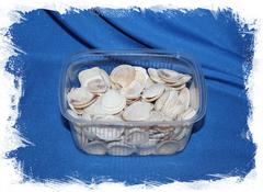Морские ракушки для декупажа и рукоделия