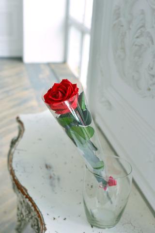 Роза на стебле King Оптом Высота*Бутон (50см*7-8см) Цвет красная