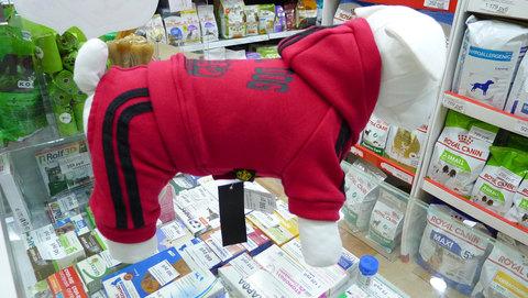 Спортивный костюм для мелких пород собак, бордовый, велюр, флис