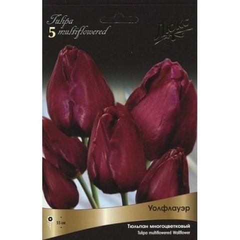 Тюльпан многоцветковый Уоллфлауэр
