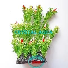 Растение Атман PP-044I, 20см