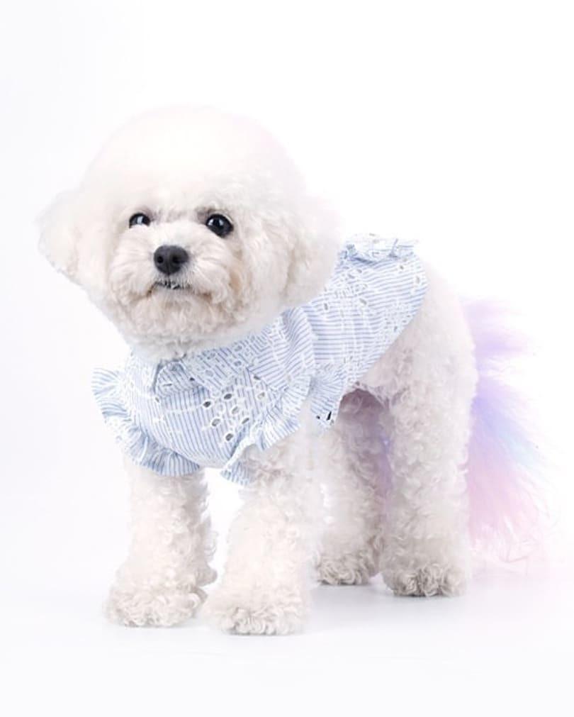 купить блузку для маленькой собаки