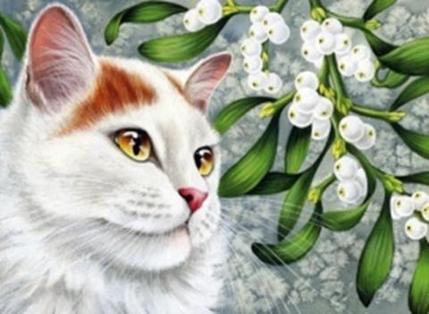 Картина раскраска по номерам 30x40 Белый кот  (арт. KTL2018)