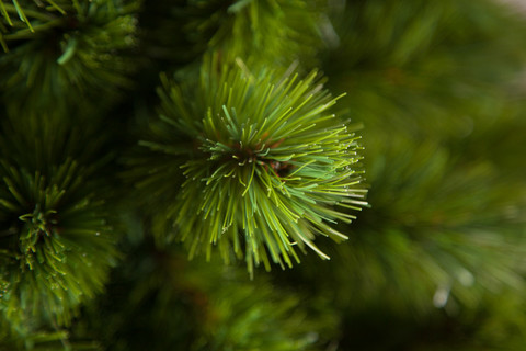Искусственная елка Триумф Норд 185 см зеленая