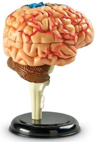 Конструктор Анатомия человека. Мозг, Learning Resources