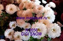 Хризантема мультифлора (шаровидная) Gigi Sno№2050