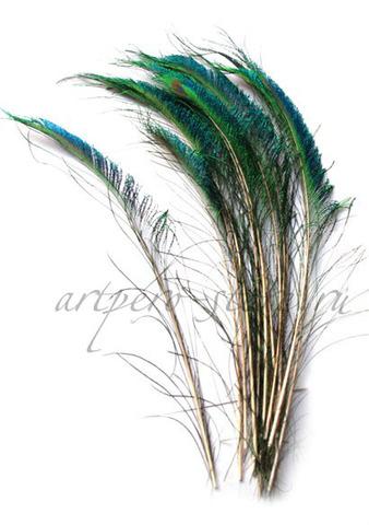 Перья павлина  мечевидные 30 см.