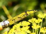 Нож складной Opinel №4 VRI Tradition Inox