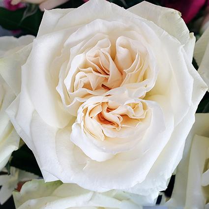 Купить букет белых пионовидных роз White O'Hara в Перми