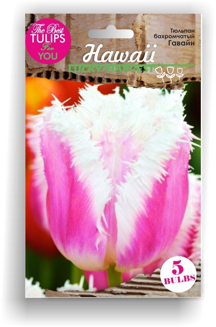 Тюльпан Бахромчатый ранний Hawaii (Гавайи) Украина 5 шт