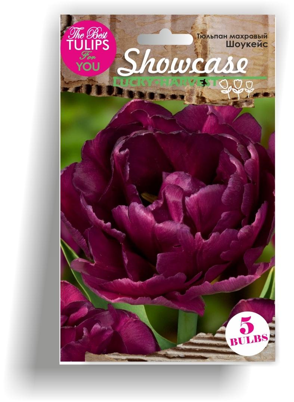 Тюльпан Махровый ранний Showcase  (Шоукейс) Украина 5 шт