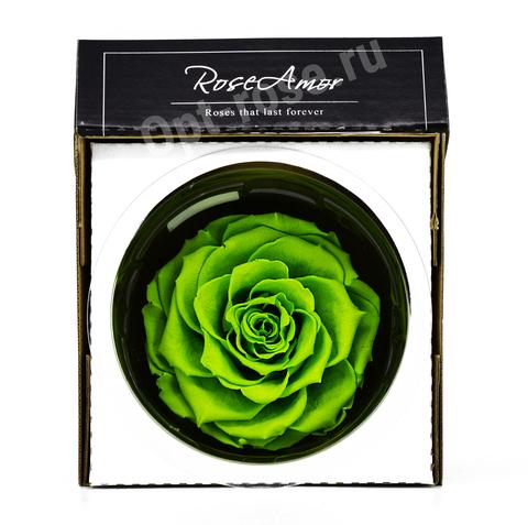 Стабилизированный Бутон Розы Кинг Rose Amor(Эквадор)Bonita Цвет Зеленый (10-12см)