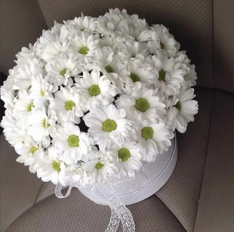 Хризантемы в шляпной коробке #1192