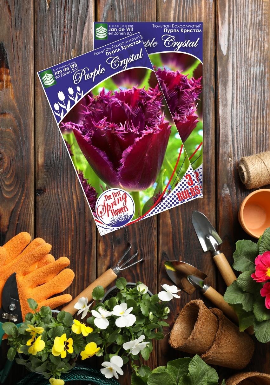 Луковицы Тюльпана Бахромчатого  Позднего