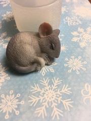 Молд мышка
