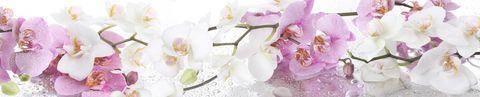 Ветка орхидеи (фотопечать)