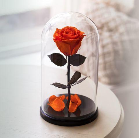 Вечная роза в стеклянной колбе оранжевая (Премиум)