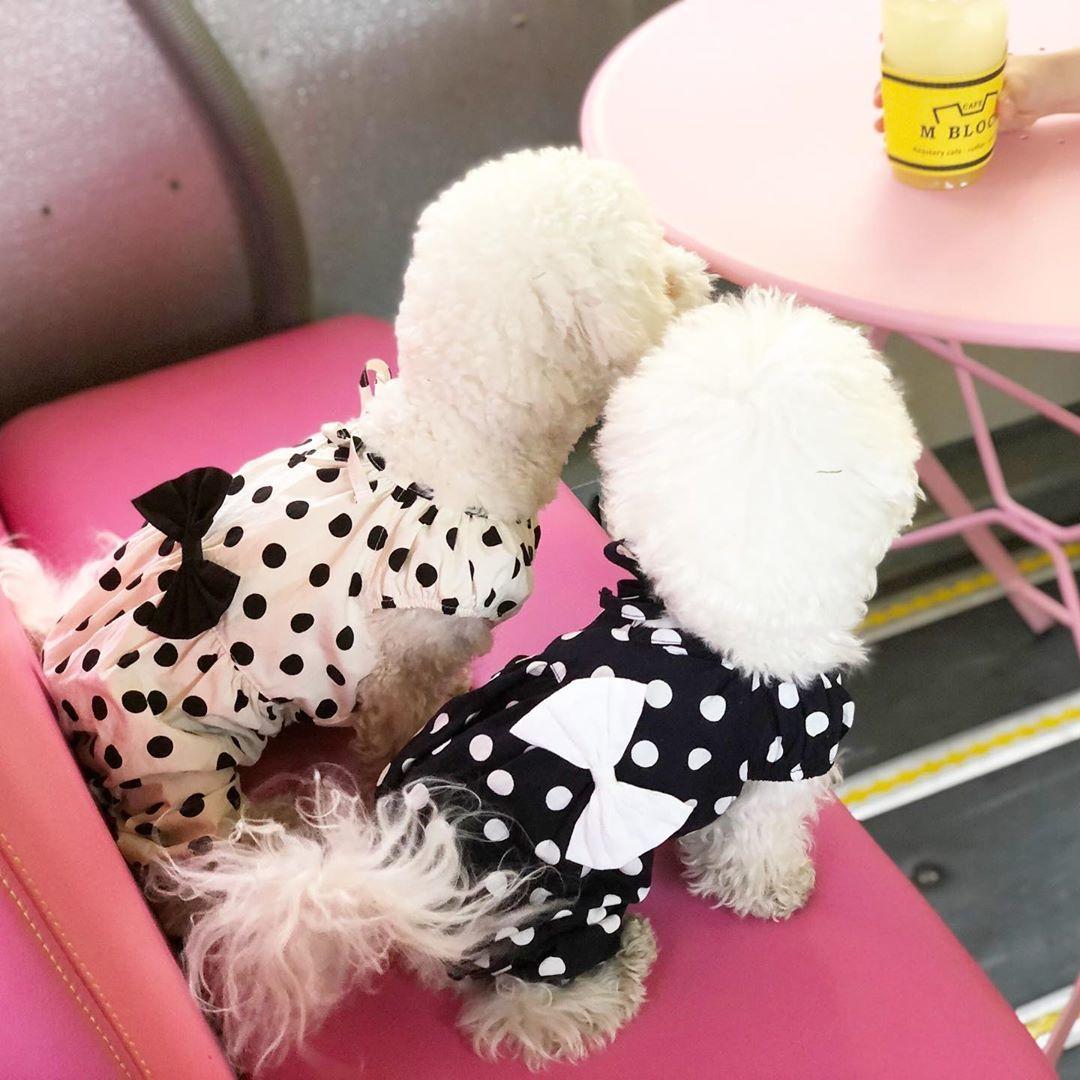 костюмы для собак из хлопка
