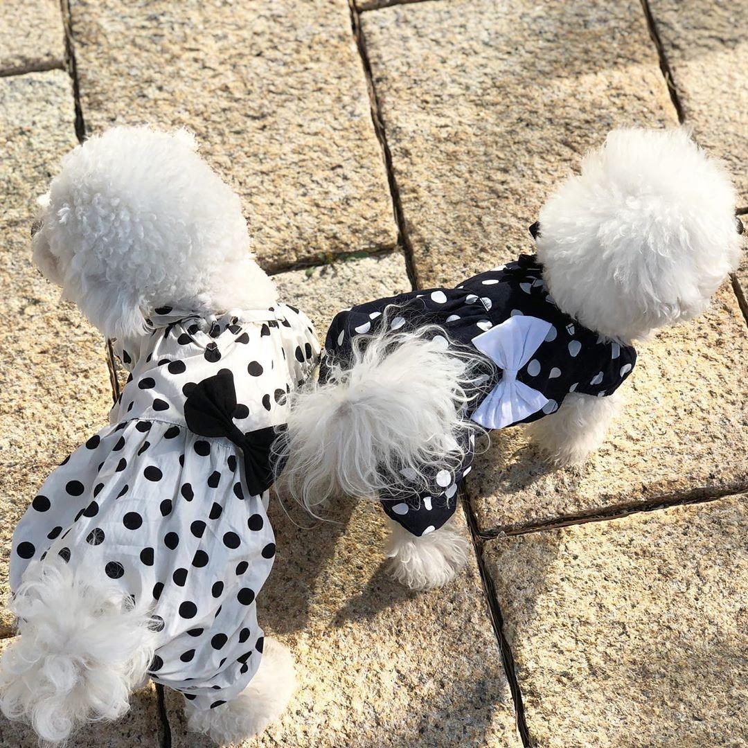 костюм из хлопка для маленькой собачки