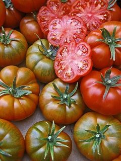 Томат Ребелион F1 семена томата индетерминантного (Vilmorin / Вильморин) РЕБЕЛИОН_F1_семена_овощей_оптом.jpg
