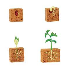 Жизненный цикл зеленой фасоли, Safari Ltd, состав развивающего набора