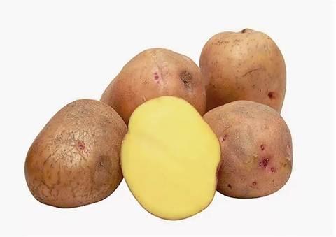 Картофель Россия