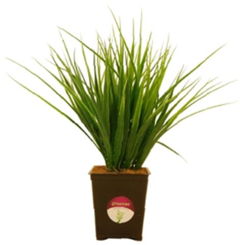 Растение иск.Осока Бани в кашпо h25см