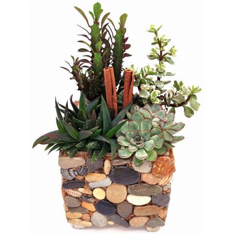 Каменная полянка - композиция из живых кактусов суккулентов