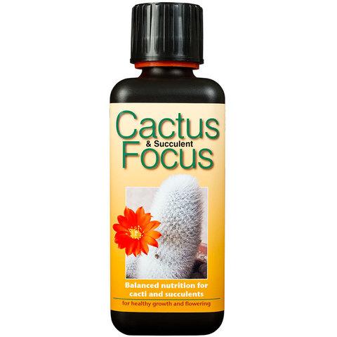 Cactus Focus 300мл