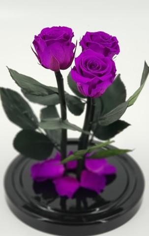 Роза Трио Мини Оптом Выс*Диам*Бутон (22*12,5*3х4см) Цвет фиолетовая