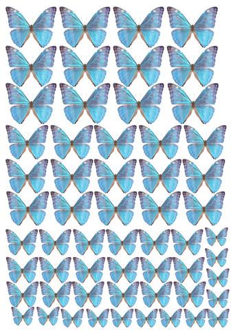 Печать на вафельной бумаге, Набор Бабочки 12