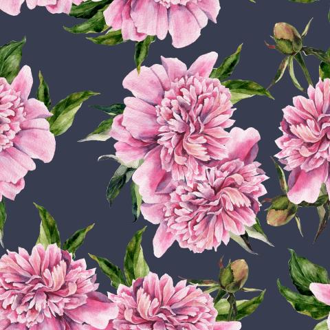 Розовые пионы на темном фоне
