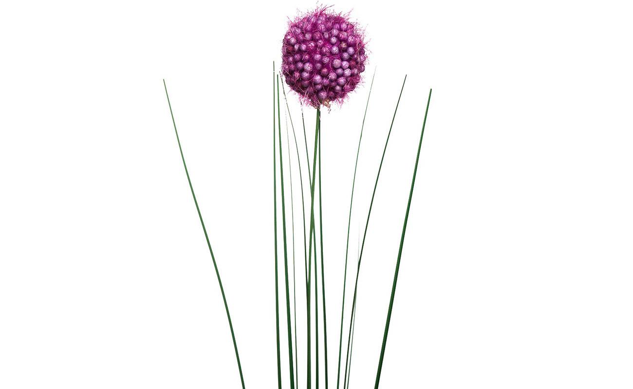 Искусственные цветы Алиум фиолетовый 75см Garda Decor 8J-14RS0018 00002895_1.jpg