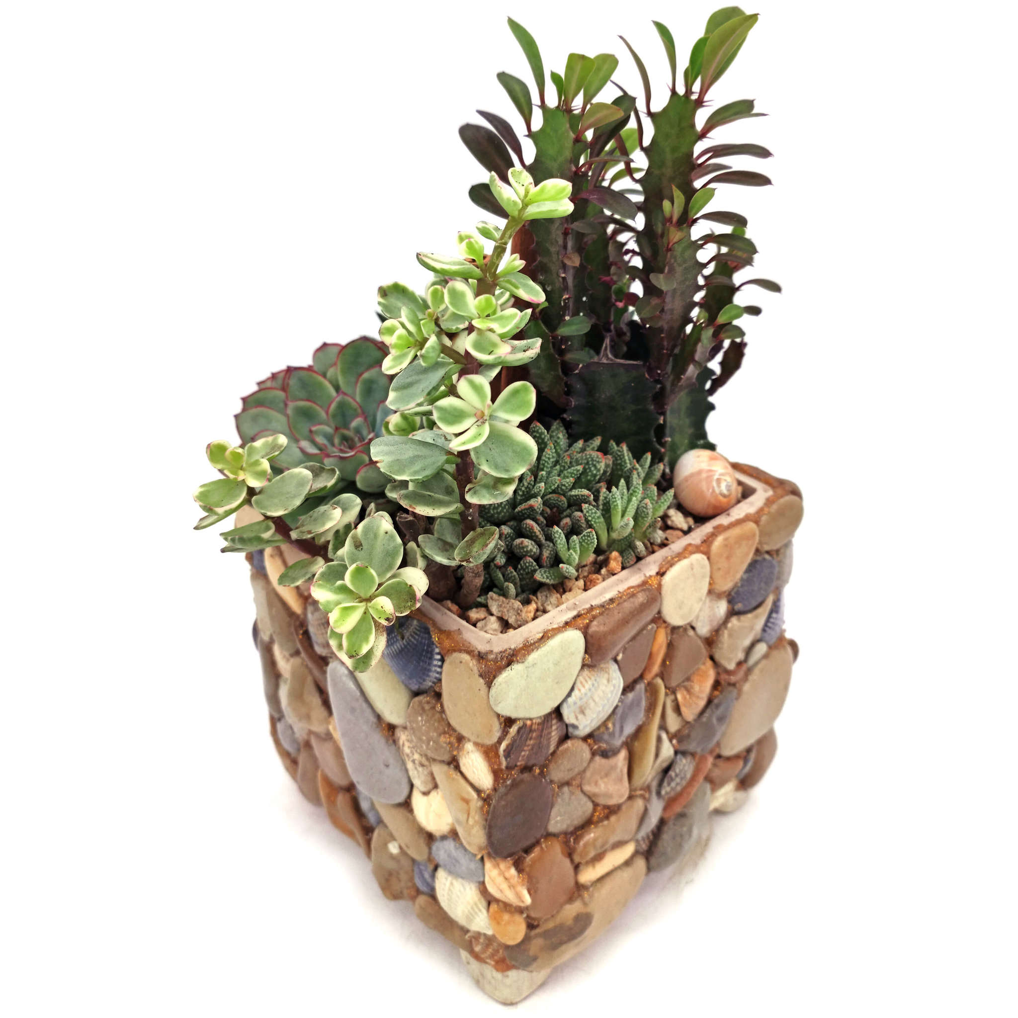 Каменная полянка - композиция из живых кактусов суккулентов (обратная сторона)