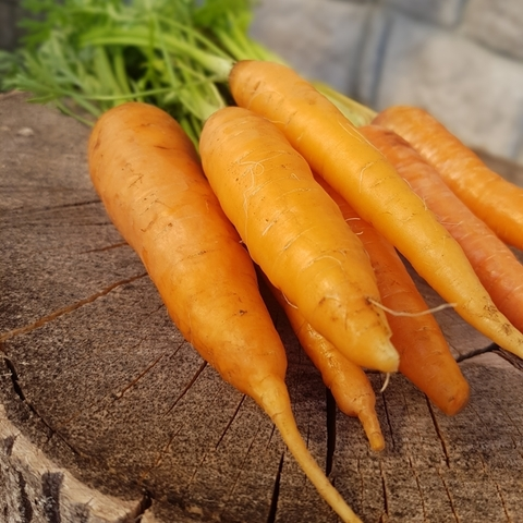 Морковь сорт Шантане БИО (Васильки), кг
