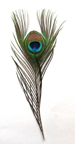 Перья павлина  декоративные,  уценка