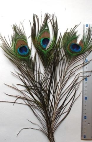 Перья павлина  декоративные,  уценка 3