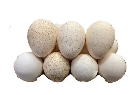 Яйца Индюшиные, 10 шт