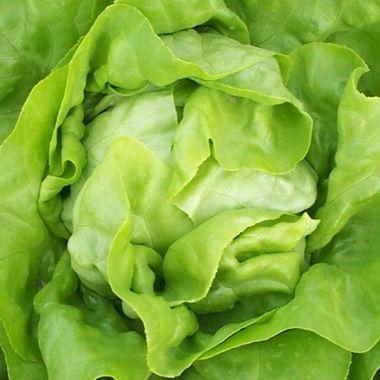 Салат Анабела семена салата айсберг (Hazera / Хазера) Салат_Анабелла.jpg