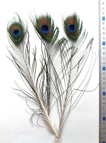 Перья павлина  декоративные, уценка 2