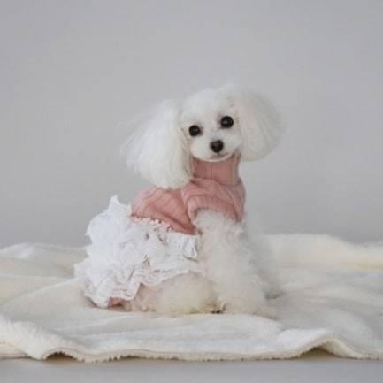 купить платье для собаки borishouse