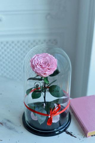 Роза King Выс*Диам*Бутон (30*18*12см) Цвет нежно-розовая