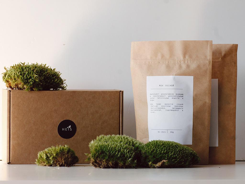 Живой мох для флорариумов\экосистем